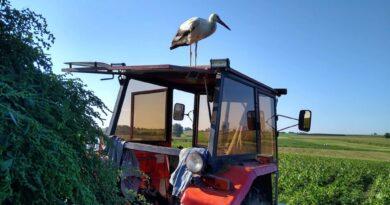 Bocian Berni z gminy Uchanie zwiedzał Targi Rolne w Poturzynie